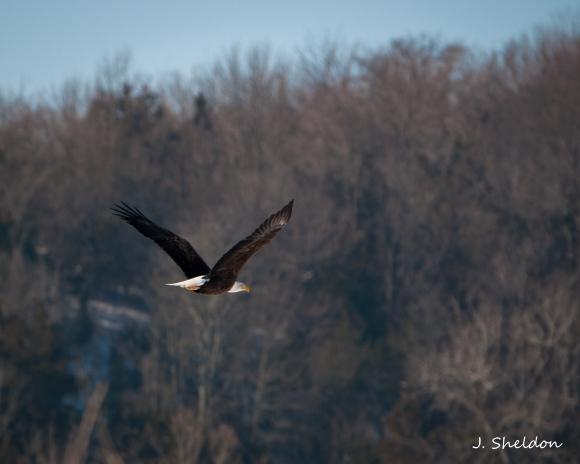 Eagle 4(s)