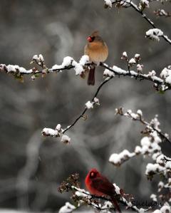 Cardinals 1(s)