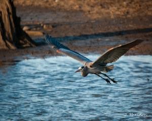 Heron 3(s)