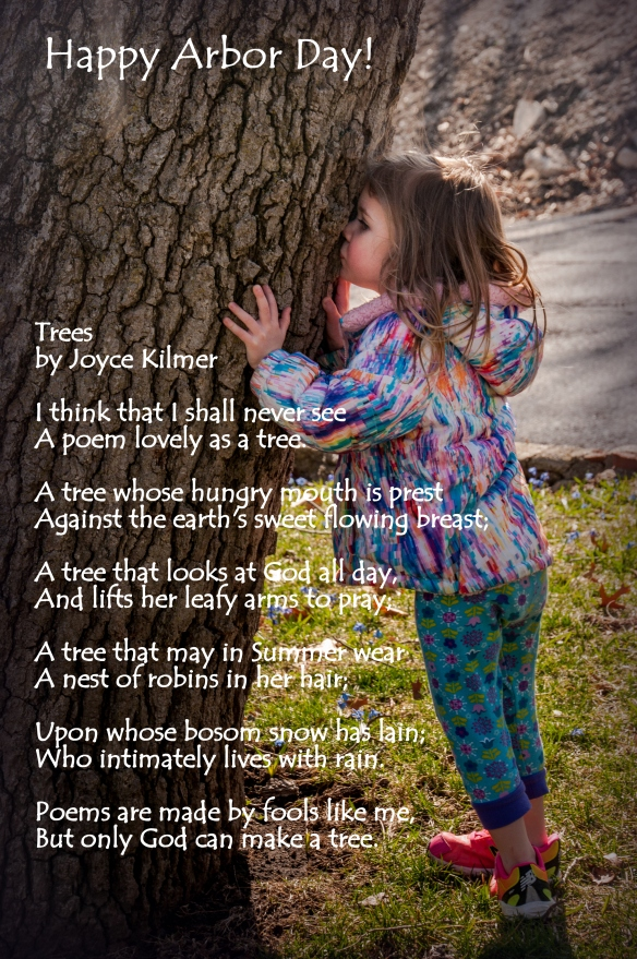 Lily tree -1.jpg