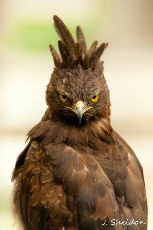 Bird 1-1(s)