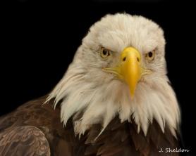 Eagle 1-1(s)