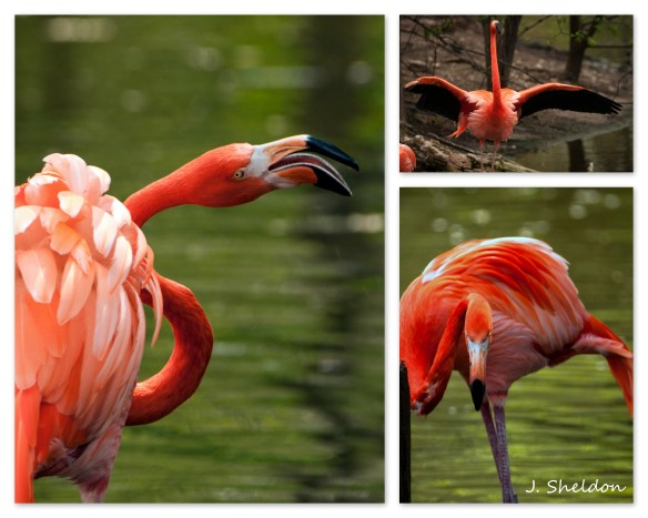 Flamingo Collage(s).jpg