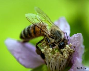 Bee 2(s)