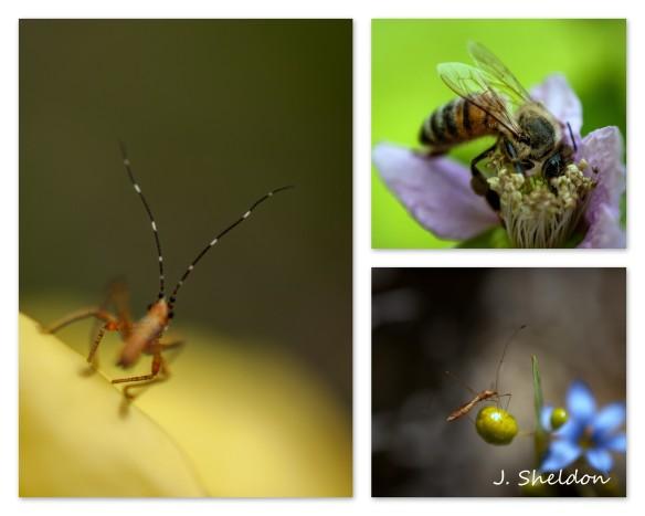 collage(s).jpg