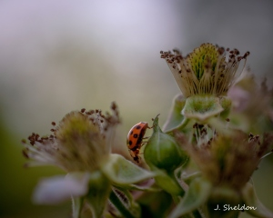 Lady Bug 1(s)