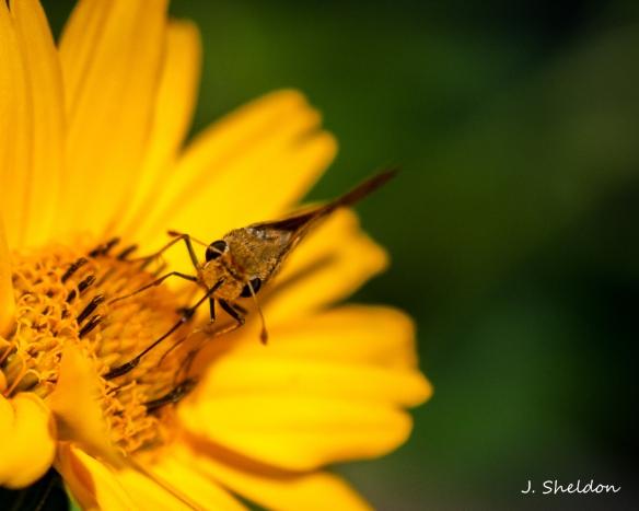 butterfly-4s