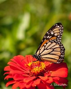 butterfly-6s