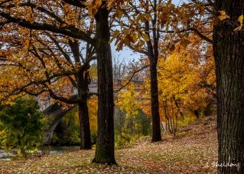 NY 4(s).jpg