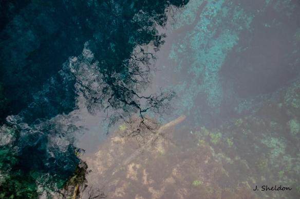 Blue Springs 4(s)